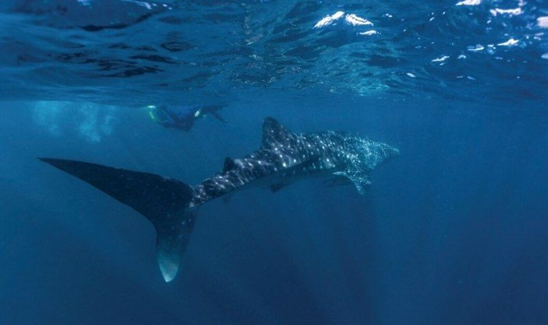 Ningaloo Reef Experience Shark